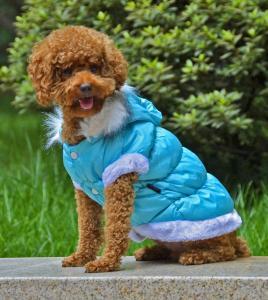 China Purple dog clothes wholesale
