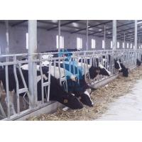 China Galvanized Steel Pipe Self Locking Feed Barriers Headlocks For Cow Farm wholesale