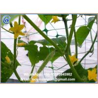 Buy cheap Hot Selling Hdpe With Uv 15x15cm Mesh Green Plant Support Net Plant Climbing Net from wholesalers