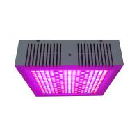 China Osunby 600W Dimmable LED Grow Lights Full Spectrum for Indoor Greenhouse Plants wholesale