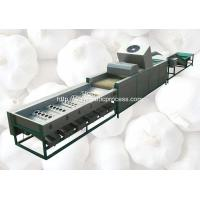 China Automatic Garlic Sorting Machine with Brusher Cleaning Function on sale