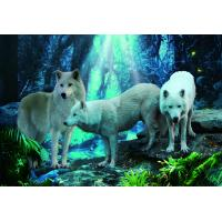 Buy cheap Pet / Pvc / PP Wolf Animal Photos Lenticular 3d Posters For Store Eco - Friendly from wholesalers