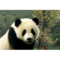 China Cute Panda Style Custom 3D Printing Service Business Printing Services on sale