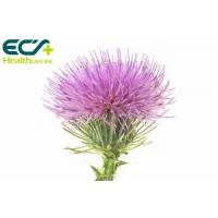 China Pharmaceutical Organic Milk Thistle Powder Silybum Marianum L Gaertn Protecting Liver wholesale