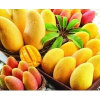Buy cheap For beverage instant mango powder drink factory price for juice producing from wholesalers