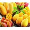 China For beverage mango juice powder factory price/pure african mango powder sample free wholesale