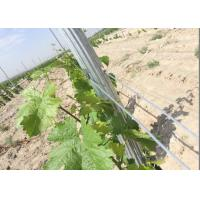 China Waterproof Metal Grape Vine Stakes Hot Dipped Galvanized Eco Friendly on sale