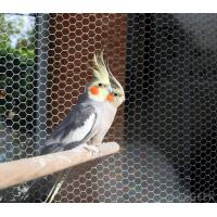 China stainless steel 304/316 Aviary mesh for bird cages netting/aviary building wholesale