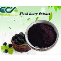 China Anti Cancer Organic Blackberry Powder , Boosts Cognition Natural Fruit Powder wholesale
