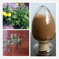 China Health Plant Extract Powder Stinging Nettle Supplement Treating Rheumatoid Arthritis wholesale