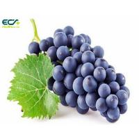 China Multipurpose Freeze Dried Blackcurrant Powder , Organic Fruit Juice Powder wholesale