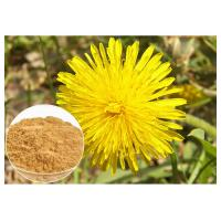 China Dandelion Root Plant Extract Powder Flavones Improving Immunity For Dietary Supplement wholesale