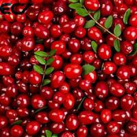 Anti Aging Organic Food Ingredients Freeze Dried Cranberry Powder Prevents Scurvy