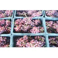 China Delicious Crimson Thompson Flame Red Globe Grapes Containing Vitamin B6, red or purple - red, Pericarp thick wholesale