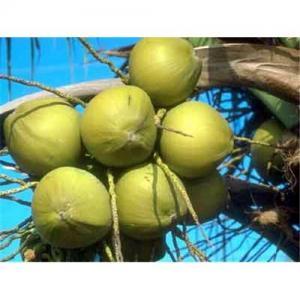 China Herb Medicine Saw Palmetto Extract, Saw Palmetto Powder, fatty Acid wholesale