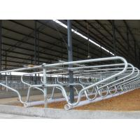 China Hot - Galvanized Single Row Type Steel Pipe Clamp Cow Free Stall For Young Cow wholesale