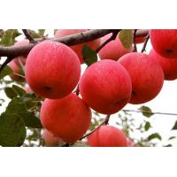 Buy cheap Fresh Red Delicious Apple Fruit Fresh Fuji Apple of Shaanxi, China from wholesalers