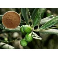 China CAS 32619-42-4 Cosmetic Raw Materials Olive Leaf Extract Powder For Digestive System wholesale