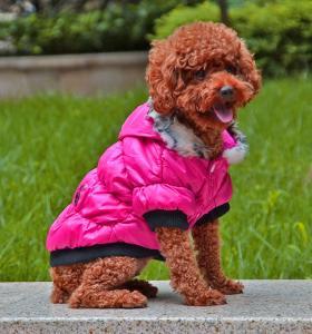 China Warm winter dog clothes wholesale