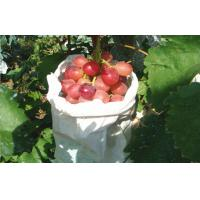 China Edible Vine Table Red Globe Grapes Containing Anthocyanins Health-Protective wholesale