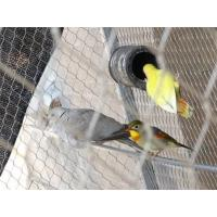 China Silvery Outdoor Aviary Netting Stainless Steel Strong Toughness For Bird Fencing wholesale