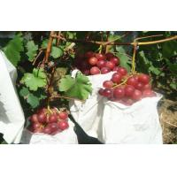 China Sweet Juicy Red Globe Grapes Containing Protein , Mineral Substance wholesale
