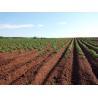 Buy cheap Ningbo Jiahe Clinoptilolite Zeolite Increases Cation Exchange Capacity of Soil from wholesalers