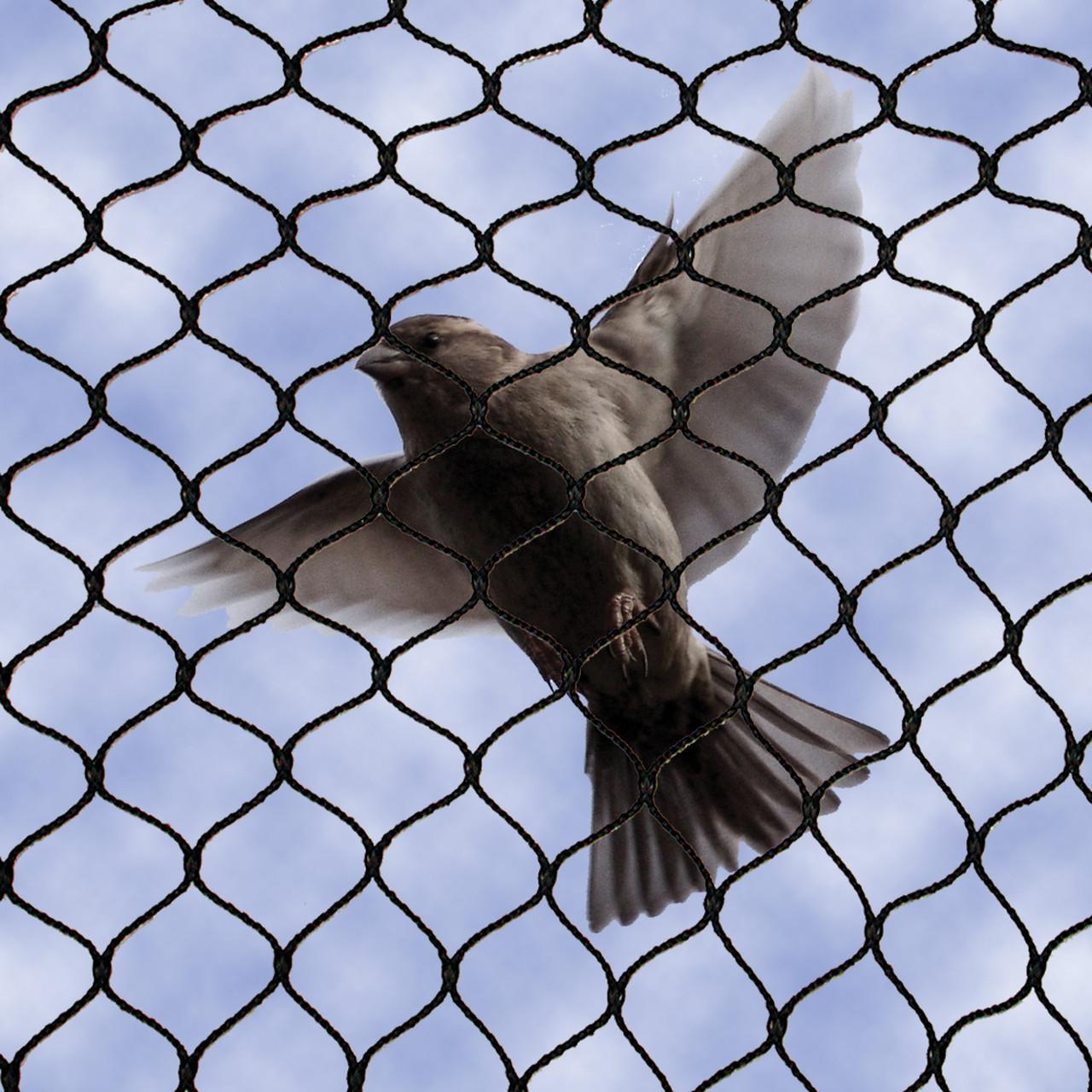 Custom Made Bird Safe Wire Mesh Smooth Surface Rope Construction 7*7 7*19