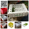 China 5kgs 10lbs pp corflute coroplast vegetable fruit packaging box wholesale