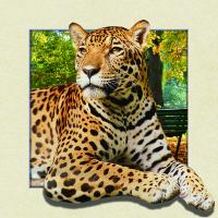 China Custom Lenticular Image Printing For Gift , 5d Animal Collage Poster 15.7x15.7 Inches wholesale