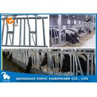 1050mm Height Locking Feed Barriers for 8 Cattle in Pasture