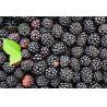 China Spray Dried Organic Food Ingredients Blackberry Fruit PowderFor Skin Care wholesale