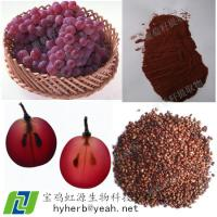 China Best Grape Seed Extract OPC 95% wholesale