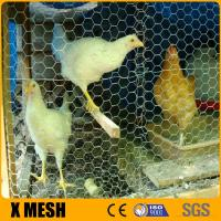 China Hexagonal wire mesh, chicken poultry farms fence wholesale