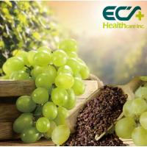 China High Content Oligomers OPC Oligomeric Proanthocyanidins Grape Extract Powder wholesale