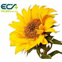 China Organic Brain Health Supplements Sunflower Phosphatidylserine Bulk Powder wholesale