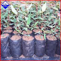 Quality Non Woven Weed Control Fabric Material , Polypropylene Landscape Fabric for sale