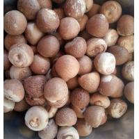 China Whole Dried Betel Nuts 70% /Dried Betel Nuts/Processed Betel Nuts wholesale