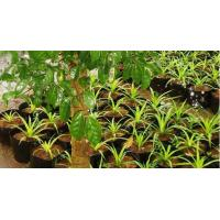 Quality Deep Black Plant Pots , plastic growing pot for seedlings for sale