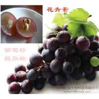 China 98% OPC Grape seed extract wholesale