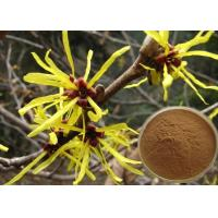 China Antipruritic Tannin Hamamelis Virginiana Extract , Witch Hazel Extract For Hair Color Protection wholesale