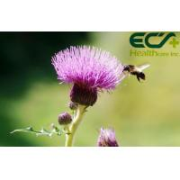 China Detoxification Pure Milk Thistle Extract Powder Herbal Nutritional Supplements wholesale
