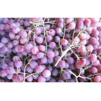 China Delicious Fresh Purple / Red Globe Grapes Health Benifits Vitamin C , K , Fluoride wholesale
