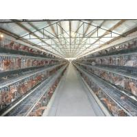 China Collecting Egg Livestock Farming Equipment Automatic Poultry Farm Equipment wholesale