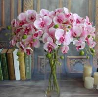 China Small butterfly orchid,seven head butterfly orchid,Dried flowers, Simulation flowers, grass flower,Artificial flowers wholesale