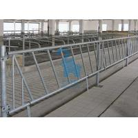 China Livestock Raising Locking Feed Barriers Animal Headlocks For Cattles wholesale