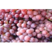 China Big Size Sweet Fresh Seedless Black / Red Globe Grapes Juicy wholesale