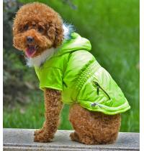 China Various design green dog clothes wholesale