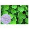 China Anti Inflammatory Gotu Kola Leaf Extract , Natural Centella Asiatica Leaf Extract wholesale