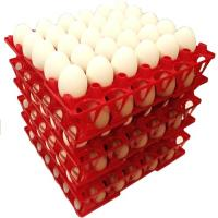 Egg tray with 30 holes PP plastic material and different color QL401